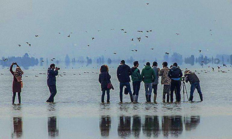 Birding  in  Iran